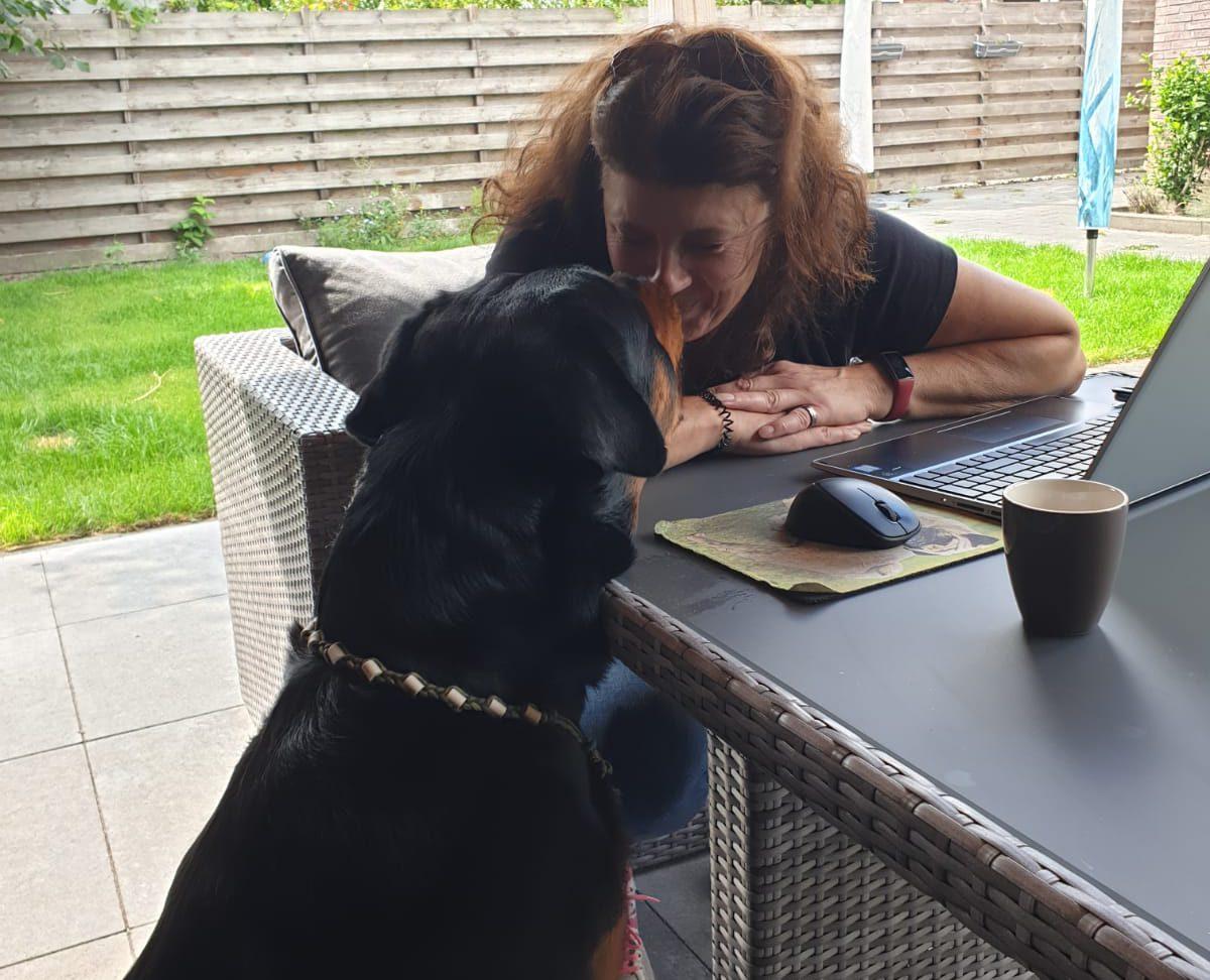 Goed gesprek met een rottweiler, hond van klant