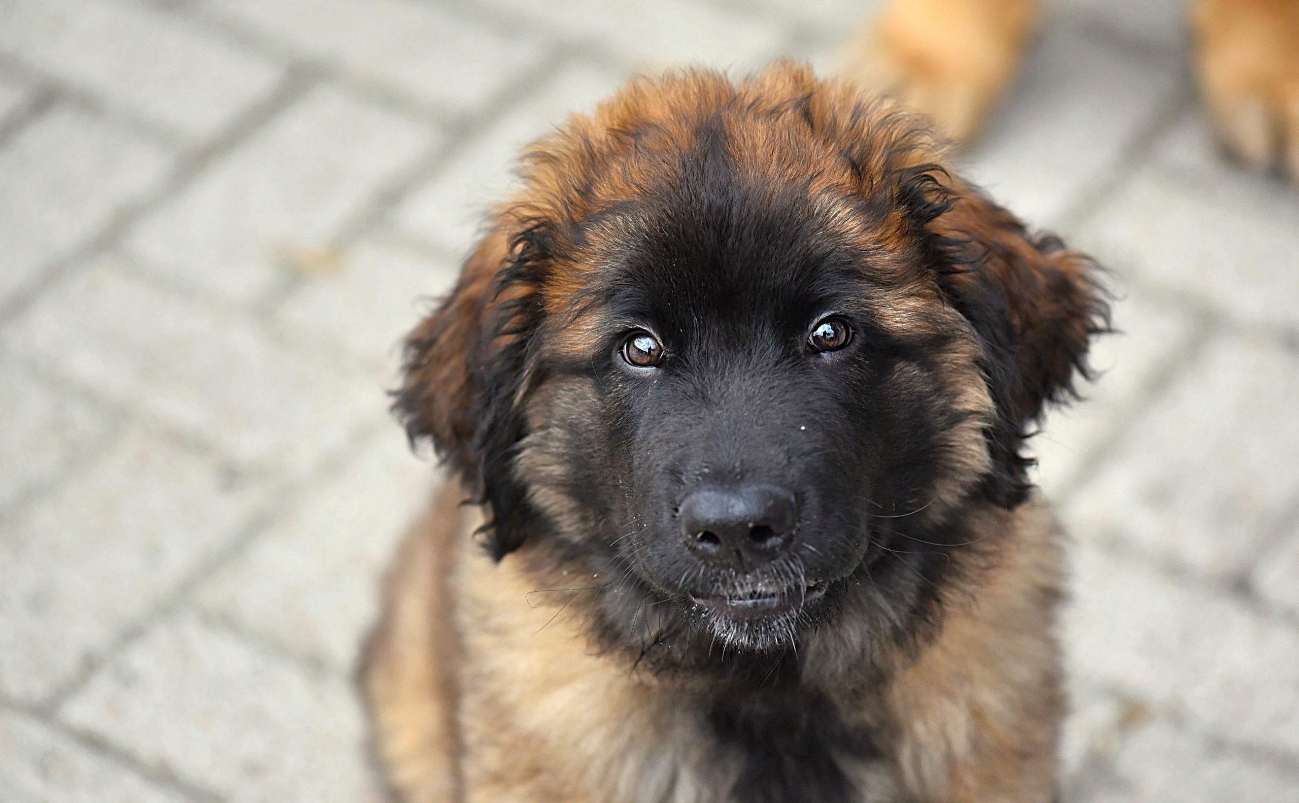 Pup Ragnar