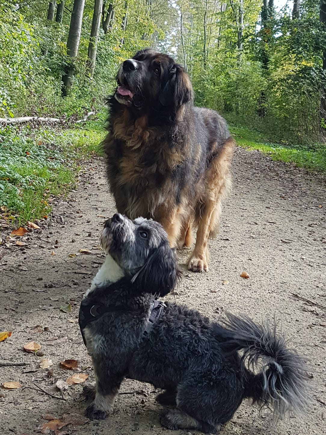 Torix als hulphond voor Spencer (hond van klant)
